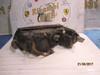 VOLKSWAGEN PASSAT 2002 FANALE ANTERIORE DX